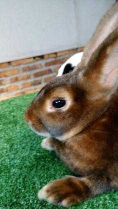 Castor bunny
