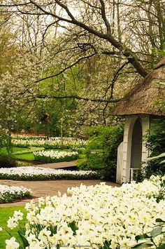 Keukenhof Gardens, The Netherlands.  Photo: Natali Antonovich, via Flickr #visitholland #travel
