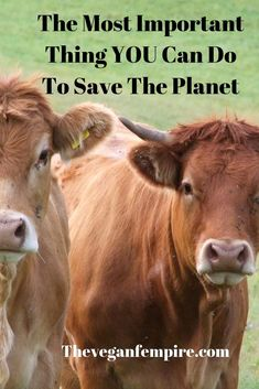 Find out the ONE simple thing YOU can do to save the planet and make a difference! Save The Planet, Our Planet, Natural Life, Natural Living, Reasons To Be Vegan, How To Eat Less, How To Make, Protest Signs, Vegan Lifestyle