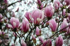 tavaszi képek - Google keresés