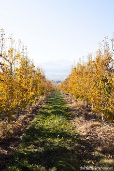Peach Orchards in Medford, Oregon