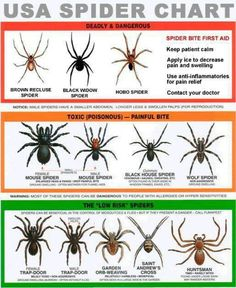 Important Spider Information