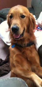 Duke was able to get treated for a kidney infection after being close FULLY funded by Pet Chance donors….Way to go!