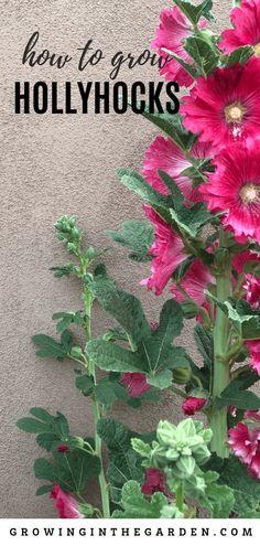 657 Best Arizona Gardening Tips Images In 2020 Gardening Tips