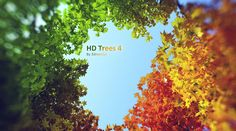 New HQ Plants / HD Trees Vol. 04 - 3D Architectural Visualization & Rendering Blog