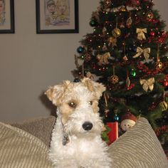 """Do you think Did someone say Christmas cookies??? :) deserves to win """"My Perfect Holiday Pet"""" Contest? Have your say!"""