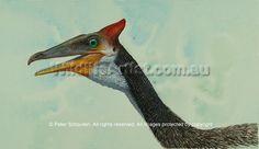 Pelecanimimus by Peter Schouten. Prehistoric Animals, Bird, Artist, Dinosaurs, Beast, Birds, Artists