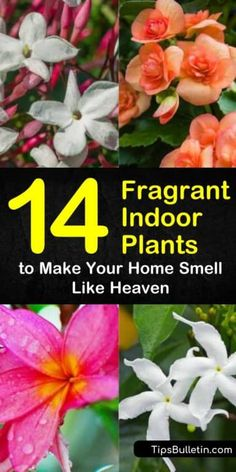 Discover how to grow fragrant indoor plants that will keep your home looking and smelling beautiful. Our guide shows you the best perennials and houseplants to grow in pots from seeds or bulbs and gives you low light garden ideas for houseplant heaven. Indoor Plants Low Light, Best Indoor Plants, Jasmine Plant Indoor, Best Smelling Flowers, Flowering House Plants, Garden Plants, Best Perennials, Indoor Flowers, Bedroom Plants