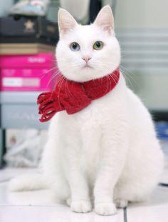 cat-scarf!