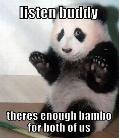 Top 40 Funny animal picture quotes #quote