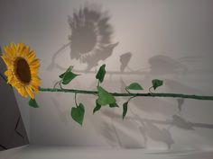 Sunflower sculpture at the Denver art museum (thank you, Julie!)
