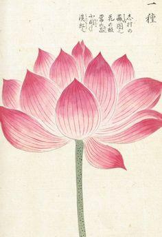 Lotus ~ Kan'en Iwasaki