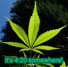 it's 4:20 somewhere https://www.twistrs.com/pageitems/photo/view/page_id/1/album_id/7/photo_id/429/tab