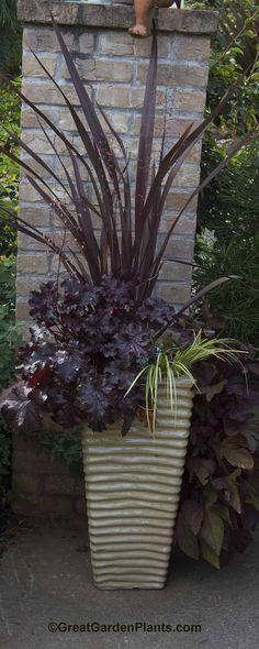 EnglishGardeners: Container Gardening with Phormium & Heuchera