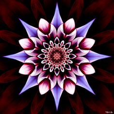 Pink Design, Design Art, Mystical Pictures, Lord Photo, Bio Art, Mandala Artwork, Forest Art, Hippie Art, Illusion Art