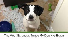 What is the most expensive thing your dog has eaten? :: Mint.com/blog