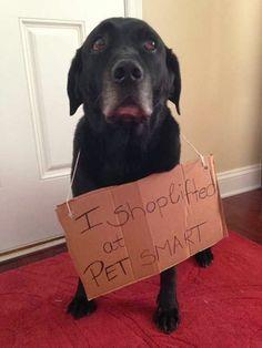 I'm Still a Smart Pet, Right?