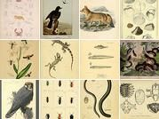 BioDivLibrary's collections on Flickr - useful for art or science or history