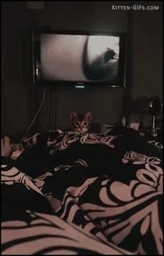 Suddenly… Kitten attack! (huge jump) • Kitten GIF Blog