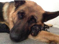 Dit is je dagelijkse portie hondenliefde! <3 Heb jij ook zo'n lieve foto?