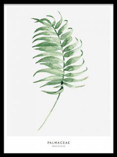 Plakat med palm leaf grønn plante på grå bakgrunn