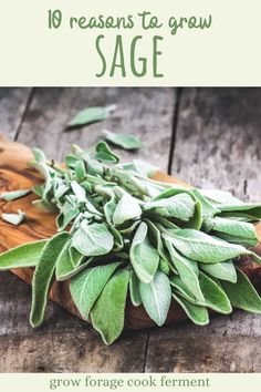 Here are 10 reasons why you should be growing sage in your garden this season for your health and for food! Sage is an awesome herb you should be growing for many reasons! Let's explore some of the many ways growing sage can be beneficial for your garden, your palate, and your health. Gardening For Beginners, Gardening Tips, Sage Garden, Garden Guide, Garden Ideas, Starting A Garden, Growing Herbs, Garden Accessories, Medicinal Plants