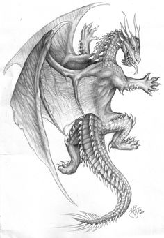 This pencil drawing of a climbing dragon is probably the design I've had the most requests for to be used as a tattoo - including one person who is using it as a full back piece! I am very flattere...