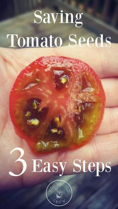 #Gardening : When Should You Sow Tomato Seeds?