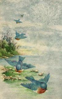 Bluebirds from Heaven - free vintage postcard
