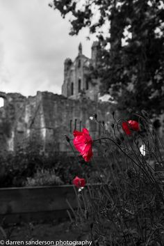 Poppies at the Abbey