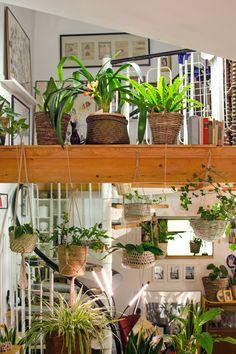 Die besten Tipps rund um Pflanzen und deinen Urban Jungle. Auch ohne grünen Duamen gelingt dir das. Was du brauchst? Finde die Pflanzen, die zu dir und deinem Zuhause passen. Wertvolle Tipp zum Düngen, Gießen, Schädlinge und vieles mehr. Inspirationen rund um Töpfe und Pflantgestaltung. Pflegetipps für Bogenhanf, Calathea, Monstera, Grünlilie, Fiddle Leaf, Efeutute und viele andere. Hängepflanzen, Palmen, Farne und mehr... Erfahre mehr hier >>> [produkte sind affiliate verlinkt / werbung] Diy Projects, Plants, Home Decor, Plastering, Condominium, Potsdam, Indoor House Plants, Refurbishment, Asylum