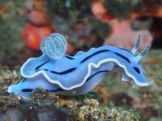 Beautiful creature UNDER WATER WORLD