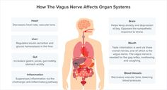 10 Vagus Nerve Symptoms and How To Treat Them