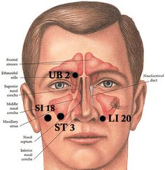 Acupuncture points used in acupressure and meridian massage to relieve sinus pain and congestion