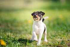All Small Dog Breed List: A -Z: 90 Tiny Dogs, Pictures, Descriptions Tiny Dog Breeds, All Small Dog Breeds, Rare Dog Breeds, Dog Breeds List, Puppy Breeds, Small Dogs, Little Puppies, Little Dogs, Rare Dogs