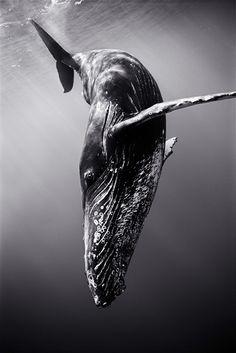 Área Visual: Wayne Levin. Fotografías en Blanco y negro