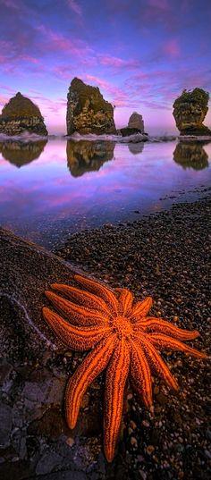 Starfish colonies at sunset - Motukiekie Beach, West Coast, South Island, New Zealand