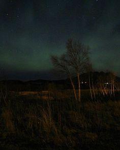 💫Northern Light💫 . . . #nightphotography #aurora #northernlights #sky #canon_photos #world_bestsky #world_bestnature #pocket_sky #pocket_trees #pocket_allnature #bestcaptureglobal #earth_shotz #tv_landscapes #everything_imaginable #ig_world_photo #igscandinavia #ig_nordnorge #visitbodo #ok_landscape #tree_brilliance #loves_united_team #still_view #heart_imprint #kings_meteo #ig_myshot #bns_nature #bns_sky #srs_nature #ig_heartshot #vip_world_photo