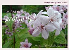 Die tägliche Inspiration No.277  www.inspirationenblog.wordpress.com  www.ulrikebischof.de