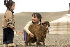 Mongolian Baby Goat A baby goat, mongolia.