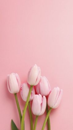 Easter Inspiration pink tulips at the bottom, on a pink background, spring wallpaper, phone wallpaper