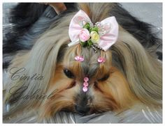 Hairstyle Dog - Model: Yorkshire Nina