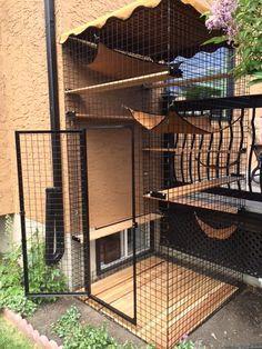 Photo Gallery - Habitat Haven Outdoor Cat Enclosure, Reptile Enclosure, Diy Cat Enclosure, Munchkin Cat Scottish Fold, Cat Castle, Cat Fence, Cat Run, Cat Hacks, Cat Playground