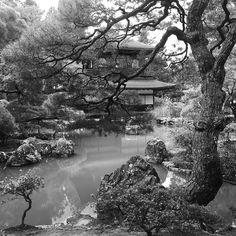 Утро в Гинкакудзи #Киото #утро #Япония #мидокоро #светсвет #свет #пруд #чб #серебро #серебряный #павильон