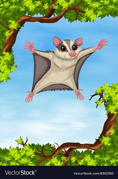 Buy Sugar Glider Flying on the Tree by BlueRingMedia on GraphicRiver. Sugar glider flying on the tree illustration Sugar Glider Care, Sugar Glider Toys, Sugar Gliders, Tree Illustration, Graphic Illustration, Bird Pictures, Animal Pictures, Sugar Glider Bonding Pouch, Jin
