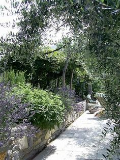 Olive trees and lavender Aromatherapy Essential Oils Guide.Recipes for Health and Beauty,Soaps and Candles,Olive Oil and Mediterranean Life. Lavender Garden, Lavender Soap, Olive Oil Hair Treatment, Fruit Bearing Trees, Essential Oils Guide, Heirloom Roses, Olive Oil Soap, Beauty Soap, Mediterranean Garden