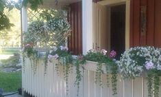 kesä Plants, Planters, Plant, Planting