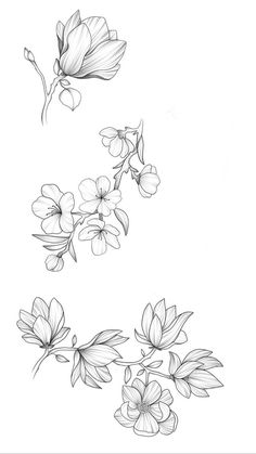 black and white line illustration of magnolia flow… – - Blumen ideen Pencil Art Drawings, Doodle Drawings, Tattoo Drawings, Mini Tattoos, Flower Tattoos, Small Tattoos, Flower Sketches, Art Sketches, Flower Drawings