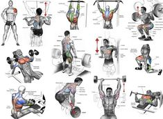 Full Body Workout Program In this article I'm going to list 3 workout plans for men to build muscle. Each workout routine is tailor. Chest Workout Routine, Best Chest Workout, Chest Workouts, Chest Exercises, Stomach Exercises, Ultimate Chest Workout, Dumbbell Exercises, Thigh Exercises, Fitness Workouts