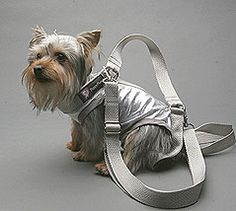 . . . For my very heavy Shih Tzu who becomes easily tired during walks.